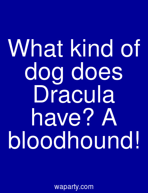 What kind of dog does Dracula have? A bloodhound!