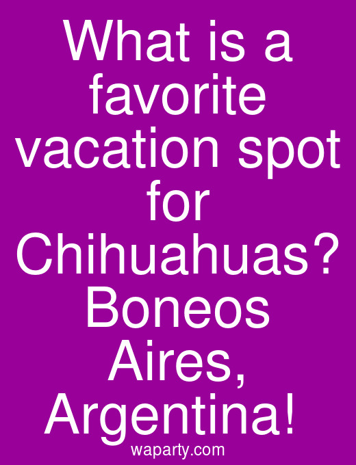 What is a favorite vacation spot for Chihuahuas? Boneos Aires, Argentina!