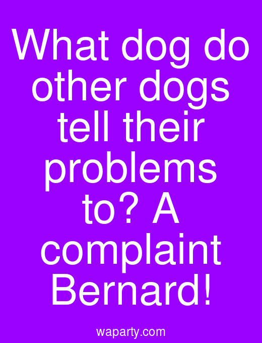 What dog do other dogs tell their problems to? A complaint Bernard!