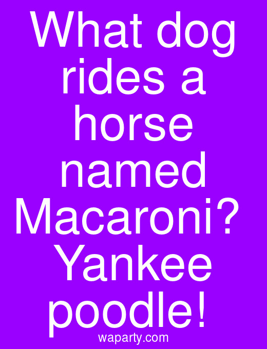 What dog rides a horse named Macaroni?  Yankee poodle!