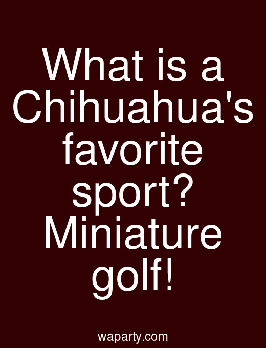 What is a Chihuahuas favorite sport? Miniature golf!