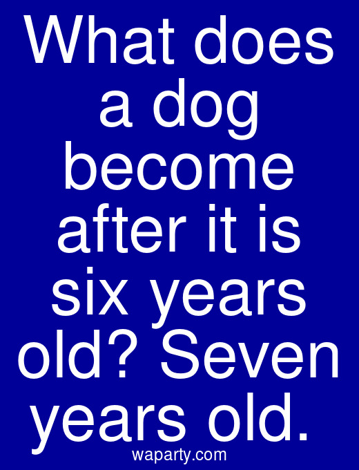 What does a dog become after it is six years old? Seven years old.