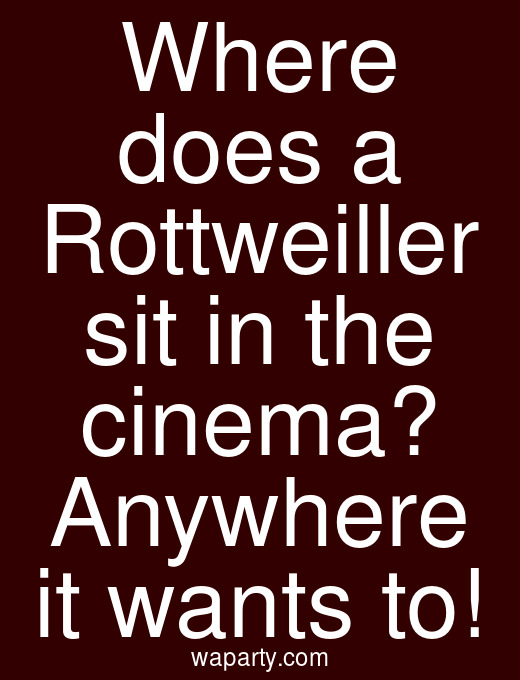 Where does a Rottweiller sit in the cinema? Anywhere it wants to!