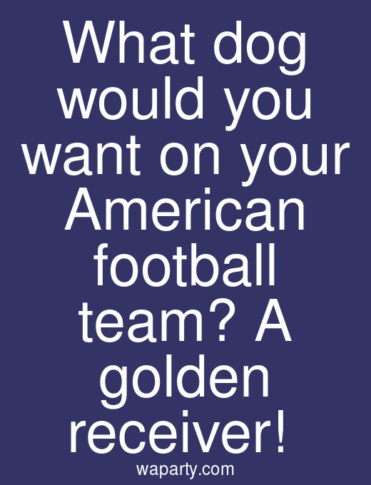 What dog would you want on your American football team? A golden receiver!