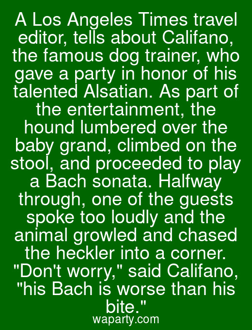 A Los Angeles Times travel editor, tells about Califano, the famous dog trainer, who gave a party in honor of his talented Alsatian. As part of the entertainment, the hound lumbered over the baby grand, climbed on the stool, and proceeded to play a Bach sonata. Halfway through, one of the guests spoke too loudly and the animal growled and chased the heckler into a corner. Dont worry, said Califano, his Bach is worse than his bite.