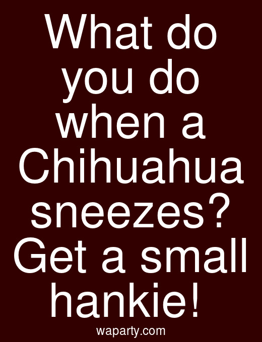 What do you do when a Chihuahua sneezes? Get a small hankie!