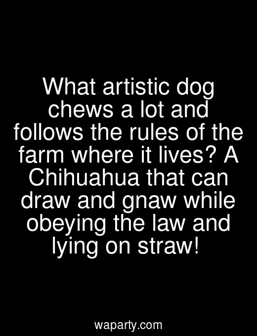What artistic dog chews a lot and follows the rules of the farm where it lives? A Chihuahua that can draw and gnaw while obeying the law and lying on straw!
