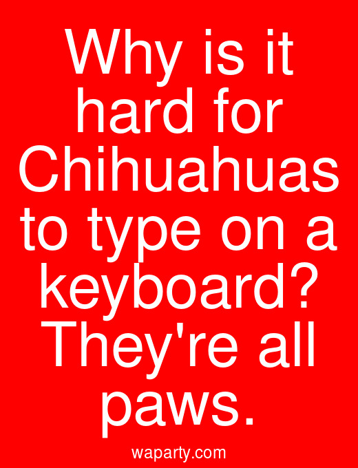 Why is it hard for Chihuahuas to type on a keyboard? Theyre all paws.