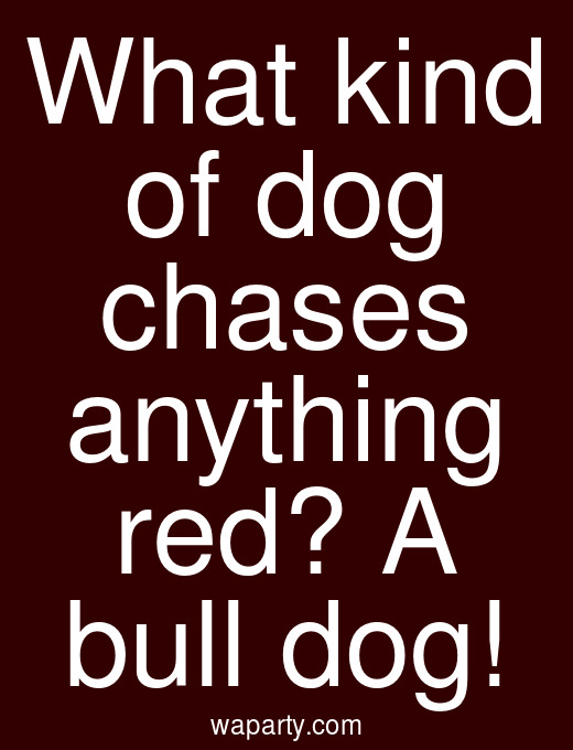 What kind of dog chases anything red? A bull dog!