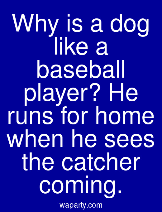 Why is a dog like a baseball player? He runs for home when he sees the catcher coming.