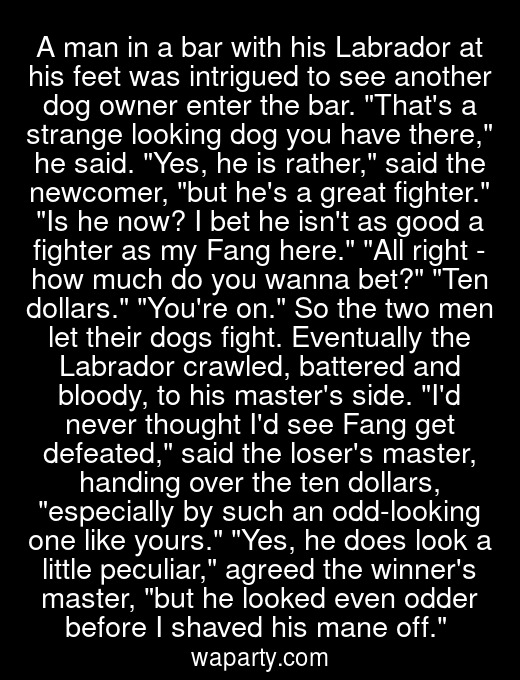 A man in a bar with his Labrador at his feet was intrigued to see another dog owner enter the bar. Thats a strange looking dog you have there, he said. Yes, he is rather, said the newcomer, but hes a great fighter. Is he now? I bet he isnt as good a fighter as my Fang here. All right - how much do you wanna bet? Ten dollars. Youre on. So the two men let their dogs fight. Eventually the Labrador crawled, battered and bloody, to his masters side. Id never thought Id see Fang get defeated, said the losers master, handing over the ten dollars, especially by such an odd-looking one like yours. Yes, he does look a little peculiar, agreed the winners master, but he looked even odder before I shaved his mane off.
