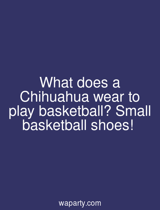 What does a Chihuahua wear to play basketball? Small basketball shoes!