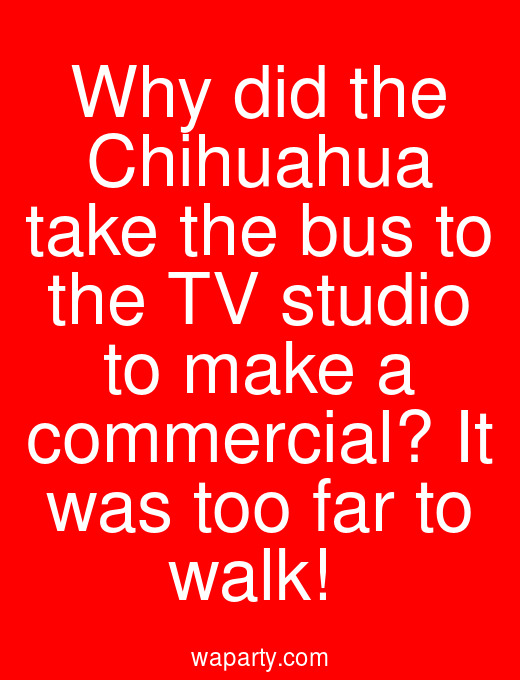 Why did the Chihuahua take the bus to the TV studio to make a commercial? It was too far to walk!