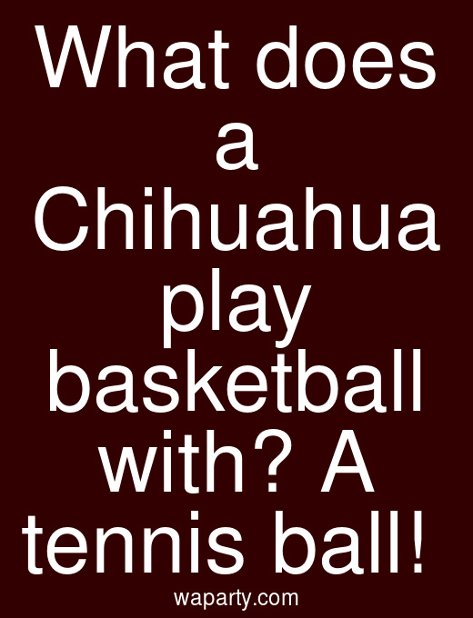 What does a Chihuahua play basketball with? A tennis ball!