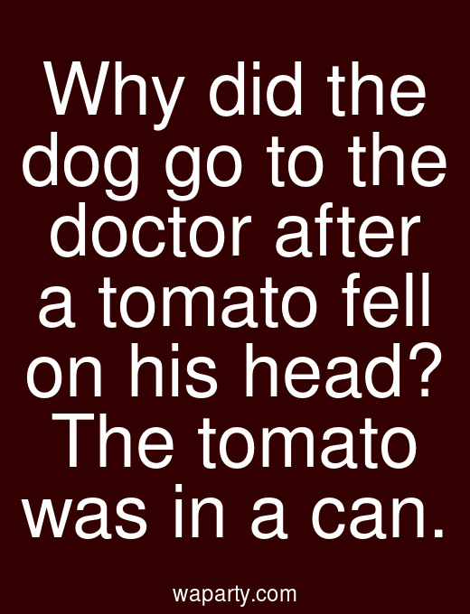Why did the dog go to the doctor after a tomato fell on his head? The tomato was in a can.