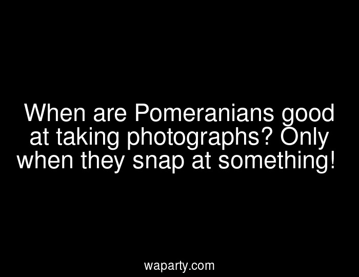 When are Pomeranians good at taking photographs? Only when they snap at something!