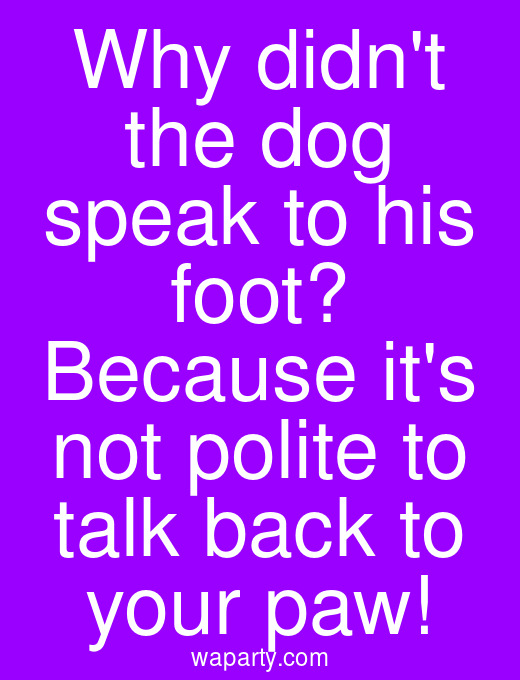 Why didnt the dog speak to his foot? Because its not polite to talk back to your paw!