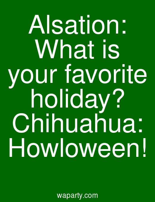 Alsation: What is your favorite holiday? Chihuahua: Howloween!
