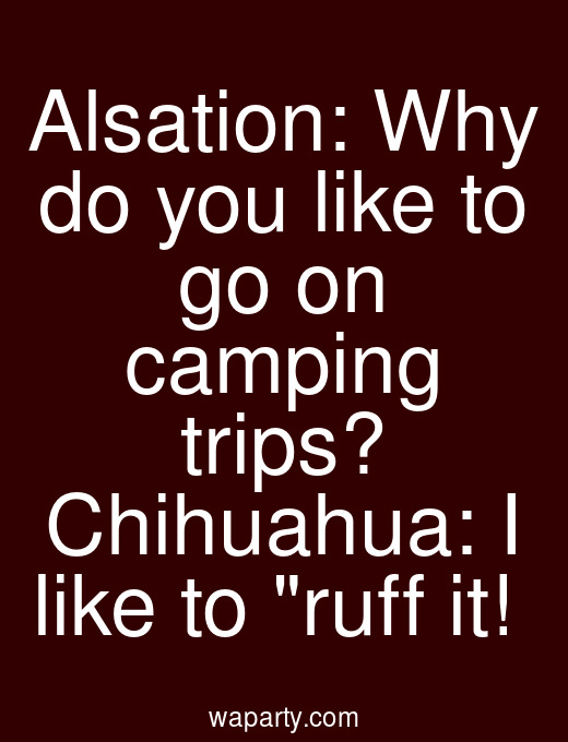 Alsation: Why do you like to go on camping trips? Chihuahua: I like to ruff it!