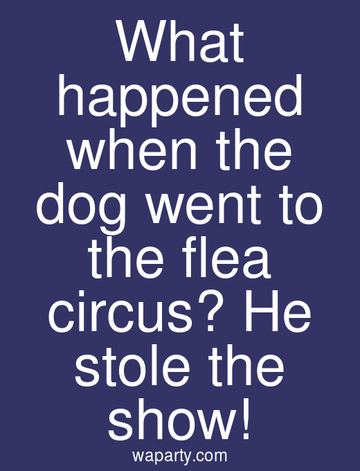 What happened when the dog went to the flea circus? He stole the show!