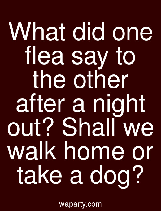 What did one flea say to the other after a night out? Shall we walk home or take a dog?