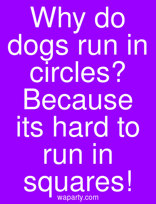 Why do dogs run in circles? Because its hard to run in squares!