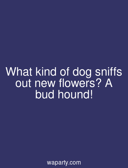 What kind of dog sniffs out new flowers? A bud hound!