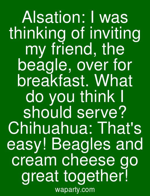 Alsation: I was thinking of inviting my friend, the beagle, over for breakfast. What do you think I should serve? Chihuahua: Thats easy! Beagles and cream cheese go great together!