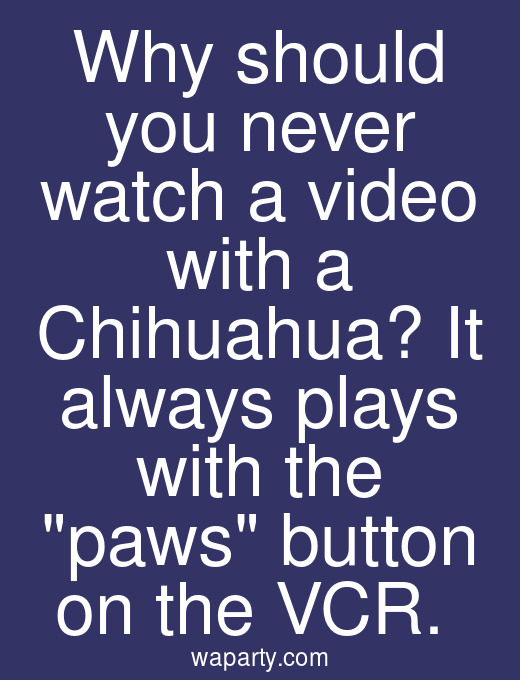 Why should you never watch a video with a Chihuahua? It always plays with the paws button on the VCR.