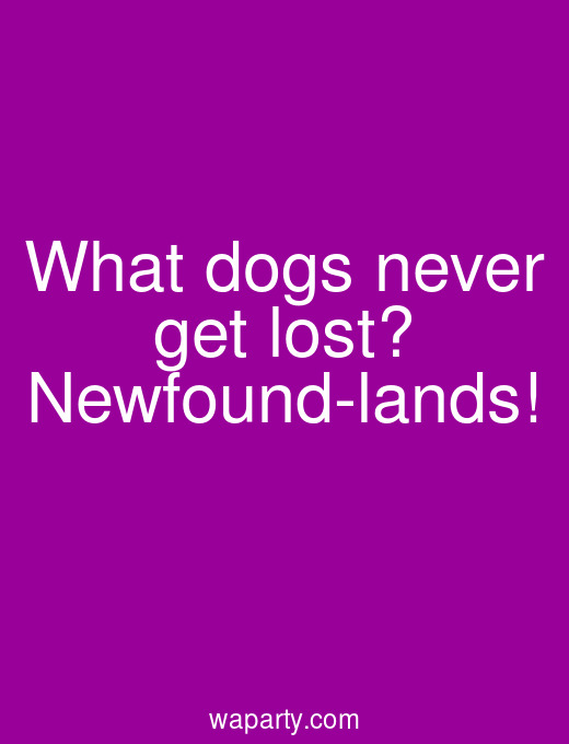 What dogs never get lost? Newfound-lands!