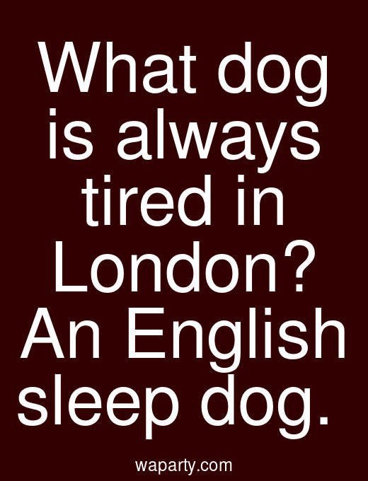 What dog is always tired in London? An English sleep dog.