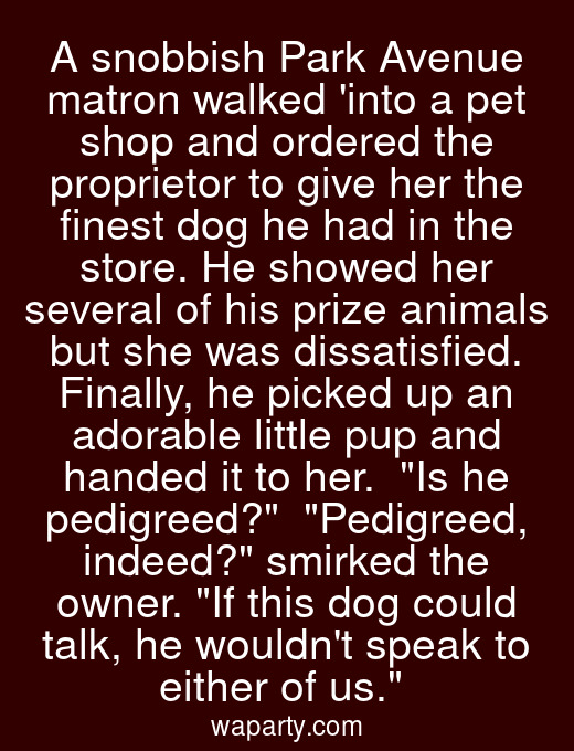 A snobbish Park Avenue matron walked into a pet shop and ordered the proprietor to give her the finest dog he had in the store. He showed her several of his prize animals but she was dissatisfied. Finally, he picked up an adorable little pup and handed it to her.  Is he pedigreed?  Pedigreed, indeed? smirked the owner. If this dog could talk, he wouldnt speak to either of us.