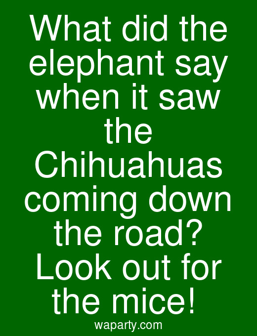 What did the elephant say when it saw the Chihuahuas coming down the road? Look out for the mice!