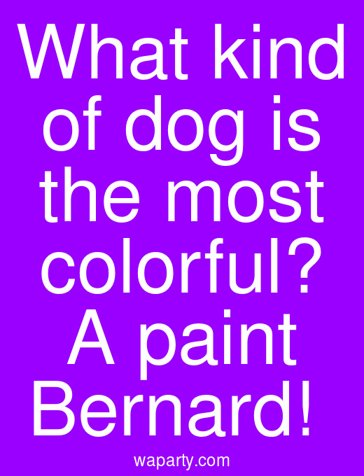 What kind of dog is the most colorful? A paint Bernard!