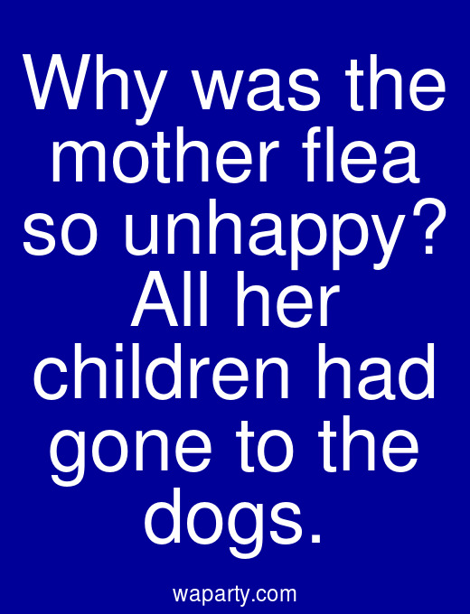 Why was the mother flea so unhappy? All her children had gone to the dogs.