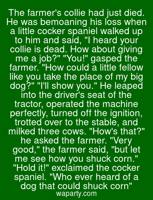 The farmers collie had just died. He was bemoaning his loss when a little cocker spaniel walked up to him and said, I heard your collie is dead. How about giving me a job? You! gasped the farmer. How could a little fellow like you take the place of my big dog? Ill show you. He leaped into the drivers seat of the tractor, operated the machine perfectly, turned off the ignition, trotted over to the stable, and milked three cows. Hows that? he asked the farmer. Very good, the farmer said, but let me see how you shuck corn. Hold it! exclaimed the cocker spaniel. Who ever heard of a dog that could shuck corn