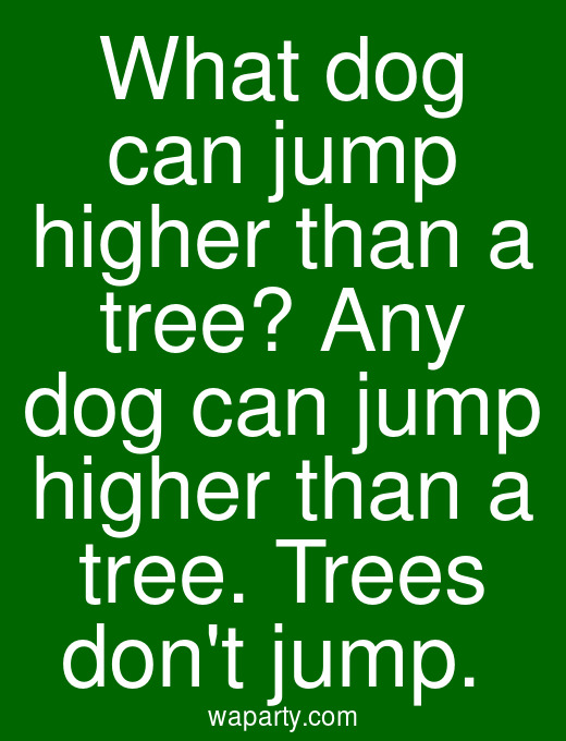 What dog can jump higher than a tree? Any dog can jump higher than a tree. Trees dont jump.