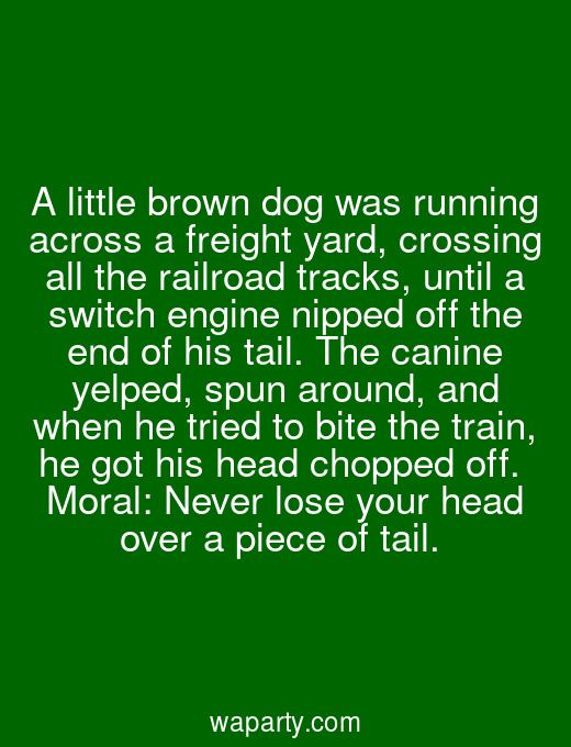 A little brown dog was running across a freight yard, crossing all the railroad tracks, until a switch engine nipped off the end of his tail. The canine yelped, spun around, and when he tried to bite the train, he got his head chopped off.  Moral: Never lose your head over a piece of tail.