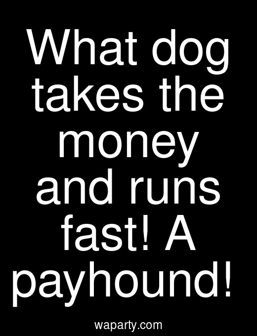 What dog takes the money and runs fast! A payhound!