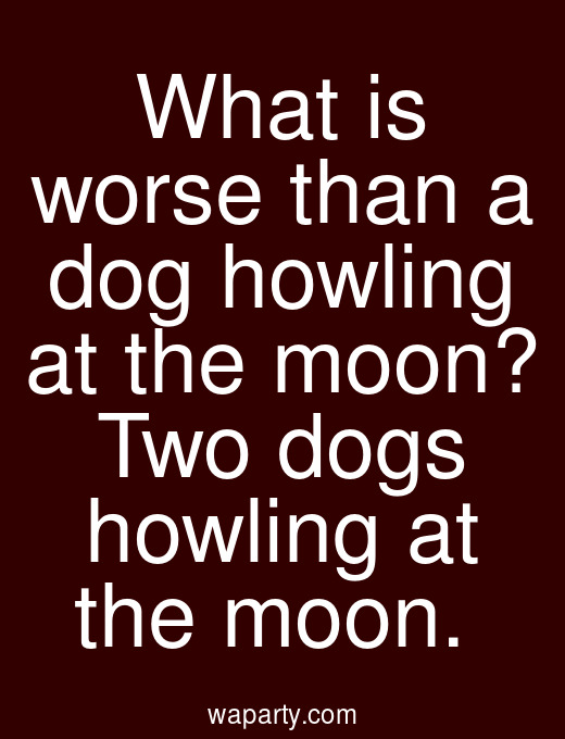 What is worse than a dog howling at the moon? Two dogs howling at the moon.