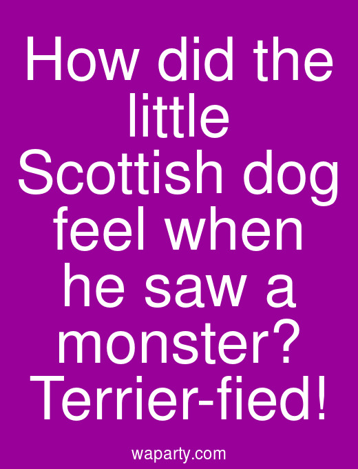 How did the little Scottish dog feel when he saw a monster? Terrier-fied!