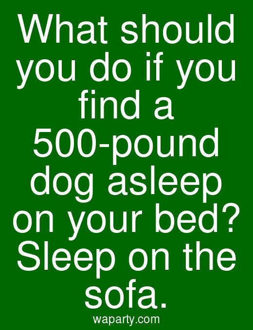 What should you do if you find a 500-pound dog asleep on your bed? Sleep on the sofa.