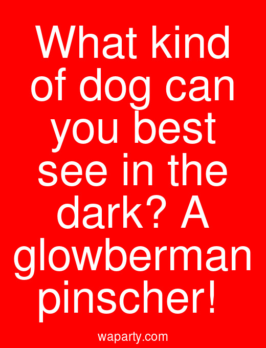What kind of dog can you best see in the dark? A glowberman pinscher!