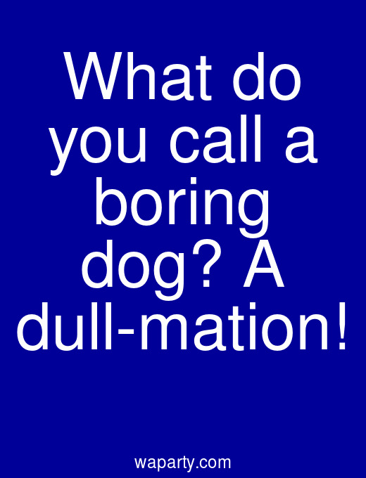 What do you call a boring dog? A dull-mation!