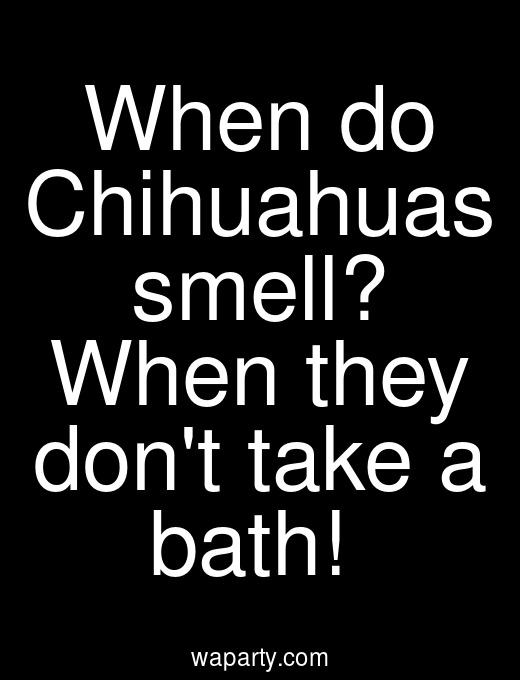 When do Chihuahuas smell? When they dont take a bath!