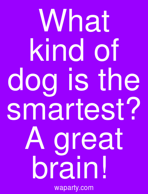 What kind of dog is the smartest? A great brain!