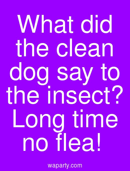 What did the clean dog say to the insect? Long time no flea!