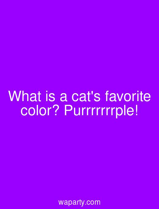 What is a cats favorite color? Purrrrrrrple!