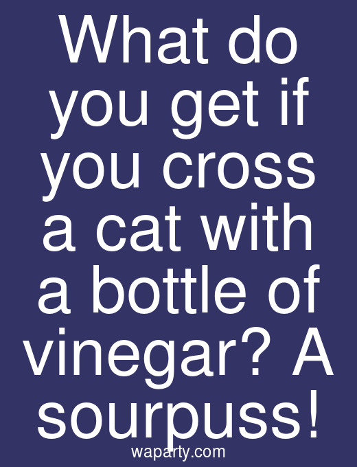 What do you get if you cross a cat with a bottle of vinegar? A sourpuss!