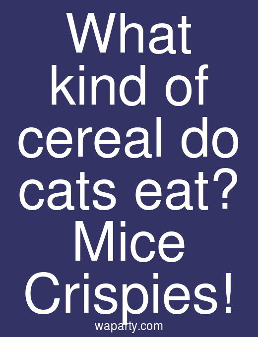 What kind of cereal do cats eat? Mice Crispies!
